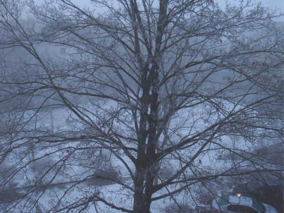 leichter Nebel und Rauhreif