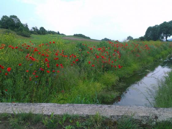 mein Lieblingsradweg im Sommer, am Flutgraben entlang zur Barbarossahöhle