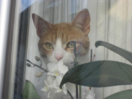 Der Fenstergucker,-)