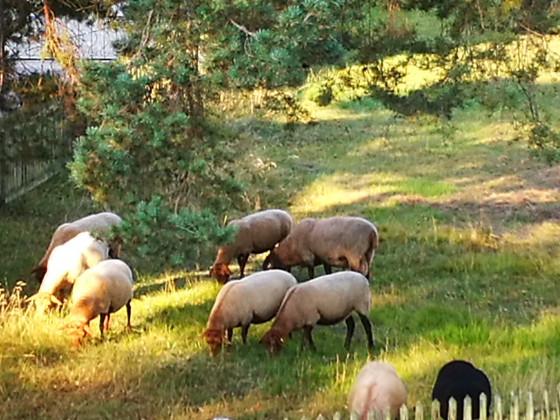 meine neuen Nachbarn