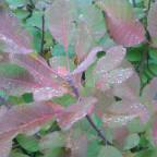 das Leuchten im Herbst