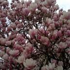 Der Frühling ist aufgeblüht!