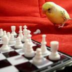 Vögel sind schlau.....