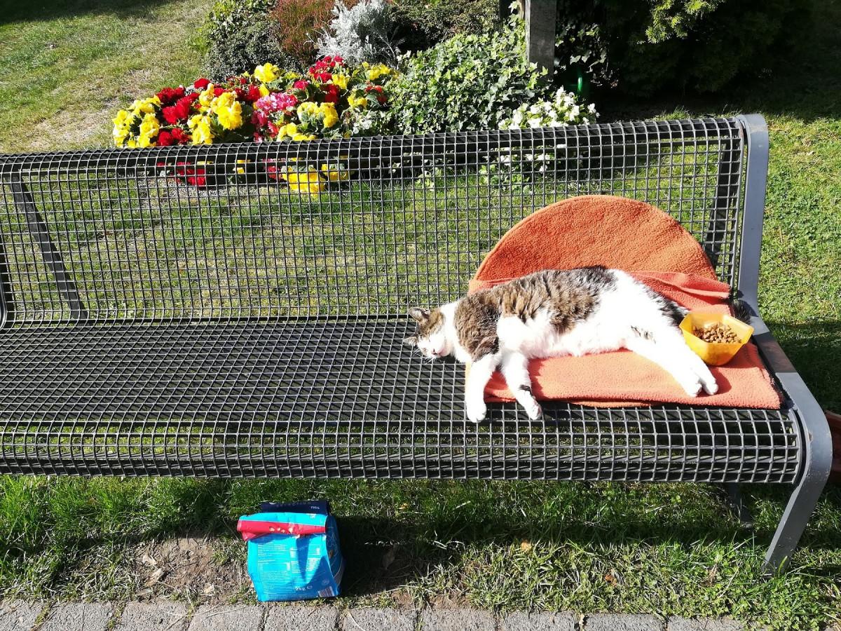 Wohl ein Katzenfreund