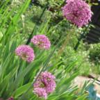 Gartenträume :)