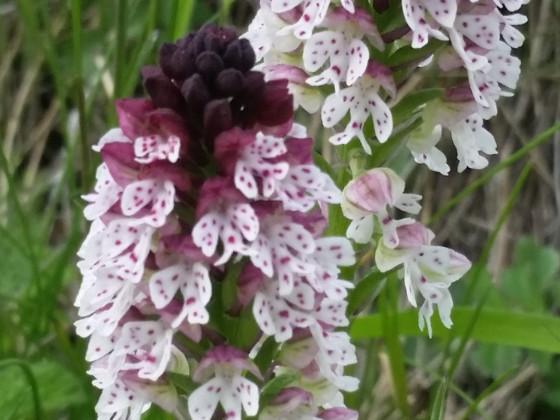 orchideen wanderung