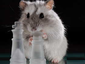 schach_hamster