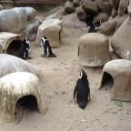 Pinguin-Pläuschen