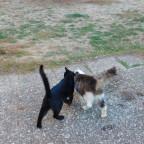 meine verschmusten Katzen...