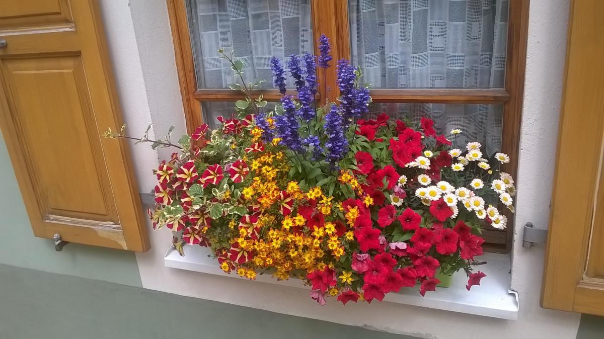 Fester eines Blumenliebhabers/in in Wolkenstein