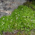 lebende Pflanzen am kargen Felsen