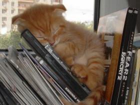 Wenn man Müde ist-findet sich überall ein Plätzchen