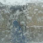 schneeschleier