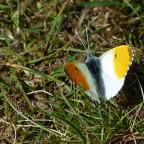 Ein anmutig zarter Schmetterling...
